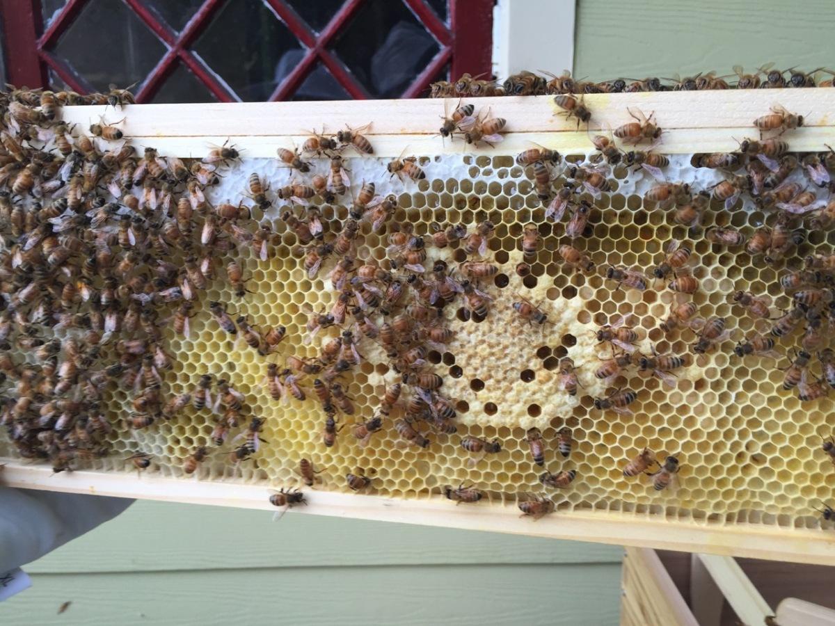 Bees (update 1)